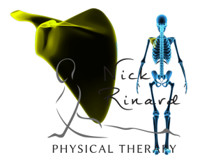 Large Image of Scapula beside skeleton with region highlighted